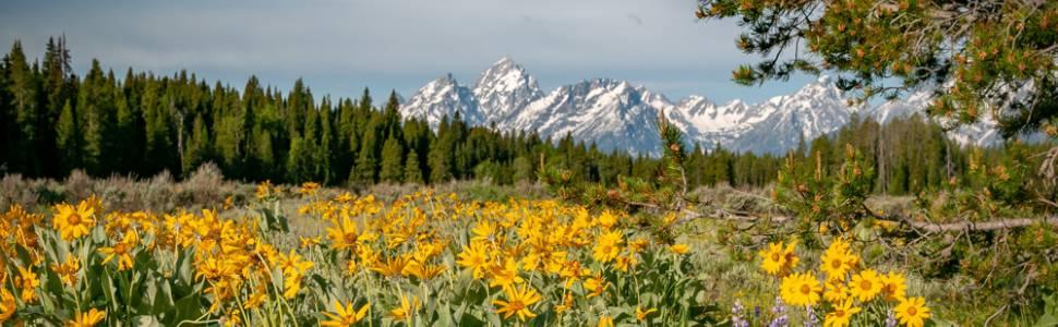 Spring in the Teton