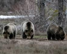 Baby Wildlife A Plenty in Jackson Hole